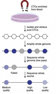 Whole-exome sequencing of circulating tumor cells provides a window into metastatic prostate cancer.