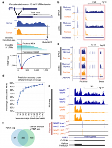 Dynamic analyses of alternative polyadenylation from RNA-seq reveal a 3'-UTR landscape across seven tumour types