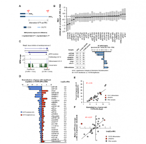 Systematic Profiling of Poly(A)+ TranscriptsModulated by Core 3' End Processing andSplicing Factors Reveals Regulatory Rules ofAlternative Cleavage and Polyadenylation