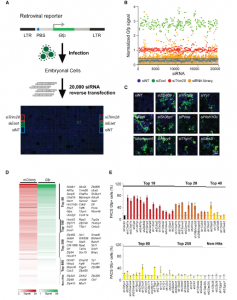 Systematic identification of factors for provirus silencing in embryonic stem cells