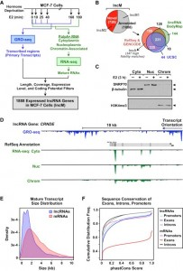 Discovery, Annotation, and Functional Analysis of Long Noncoding RNAs Controlling Cell-Cycle Gene Expression and Proliferation in Breast Cancer Cells