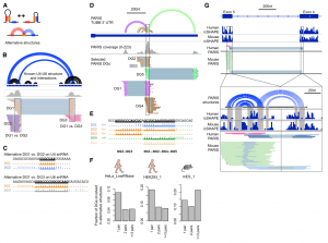 RNA Duplex Map in Living Cells Reveals Higher-Order Transcriptome Structure