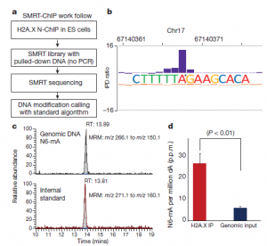 DNA methylation on N6-adenine in mammalian embryonic stem cells