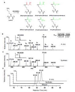 Metabolic Regulation of Gene Expression by Histone Lysine β-Hydroxybutyrylation