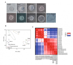 Tracing the expression of circular RNAs in human pre-implantation embryos