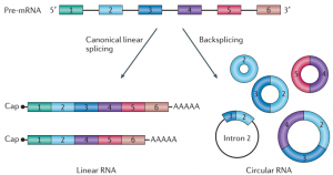 Detecting circular RNAs: bioinformatic and experimental challenges